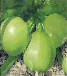 A Grade Green Summer Squash, Gunny Bag, 20 Kg
