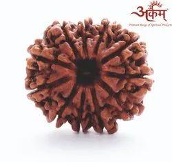 ARKAM Eleven Mukhi Rudraksha Nepali