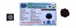 Kesar Zems 6 Mukhi 6 Face Rudraksha with Certificate