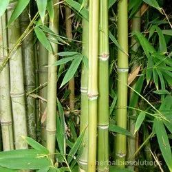Bamboo Extract, Packaging Size: 5kg