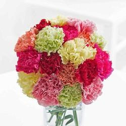 794c9a8bc3a6 Carnation Flower - Wholesaler & Wholesale Dealers in India