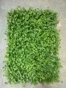 Artificial Grass Mat-  Dazzler Hedges