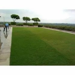 Korean Grass Horticulture Landscaping Service, Pan India, Coverage Area: 1000 to 3000 Square Feet