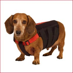 Wiggle less Dog Back Brace
