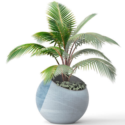 Palm In Pot.Coconut Palm Pot