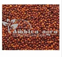 Seeds for Agriculture