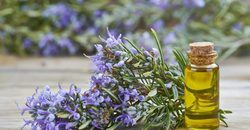 Rosemary Reconstituted Essential Oil