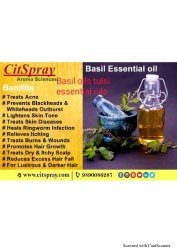 Basil Oils Tulsi Essential Oil