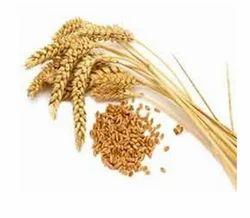 Wheat Service