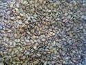 Natural Hybrid Sesame Seed, Pack Size: 60 Kg