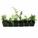 Terrariums Plant