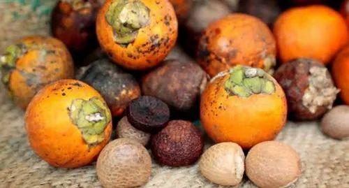Betel Nut and Broom Stick Wholesaler | Urs Store, Chennai