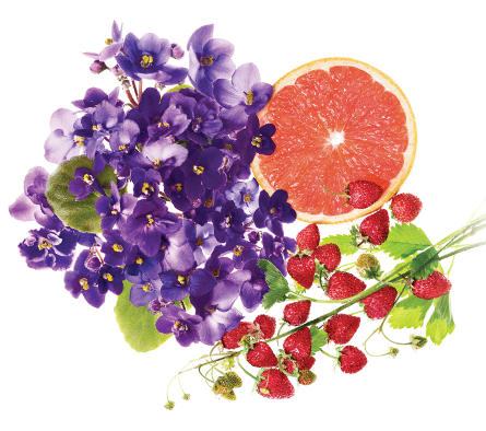 Floral Fruity Fragrance, For Personal, Rs 400 /kilogram Norex Flavours  Private Limited | ID: 20195210633