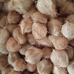 SEMI HUSKED COCONUTS, Packaging Size: 12 kg