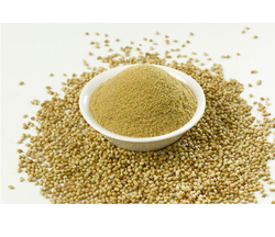 25 kg Coriander Powder, Packaging: Plastic Bag