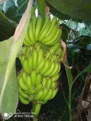 A Grade Green Banana, Crate, 20 Kg