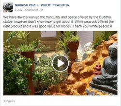 White peacock offered the right product by Nainesh Vaid¿¿¿