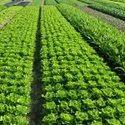 Biofertilizer For Agriculture Soil