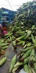 Fresh corn, High in Protein