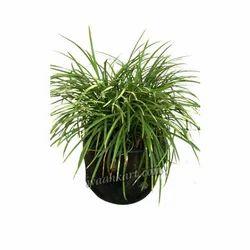 Unbreakable Black Decorative Planter