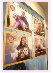 Dog Veterinary Treatment Service