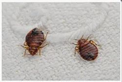 Monthly Residential Bed Bugs Pest Control Service, Bed Bugs Control, Delhi