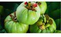 Garcinia Cambogia Extract (50% HCA)