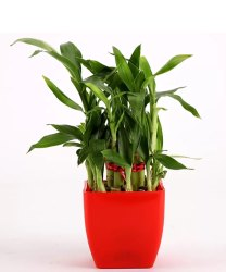 Plants and Trees on Rent For Marriage and Other Functions and Events