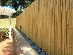 Bamboo Wood Log