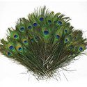 Mor Pankh-Peacock Feather