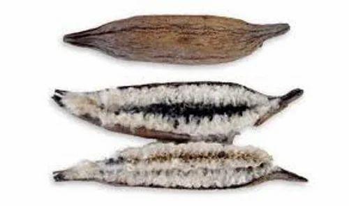 Silk Cotton Seeds -Bombax Ceiba Tree Seeds