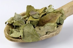 Curry Leaves Meetha Neem Curry Leaf - Kadi Patta, No Artificial Flavour, Dried: Yes