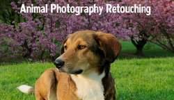 Pet Animal Photo Retouching Services