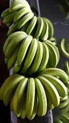 A Grade G9 Cavendish Banana