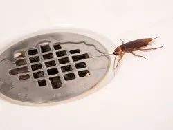 Residential Cockroaches Pest Control Services in Maharashtra
