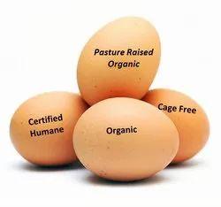Brown Eggs in Bengaluru - Latest Price & Mandi Rates from