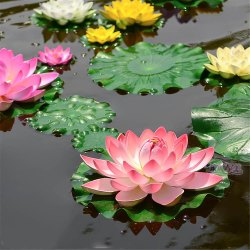 Lotus Aquatic Pool Plant, Packaging Type: Poly Bag