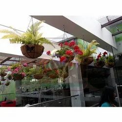 Coir Hanging Basket with Flower Plants