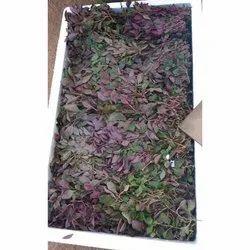 A Grade Tamil Nadu Fresh Fenugreek Leves, Carton, Bag