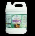 Household Panchagavya Pest Control