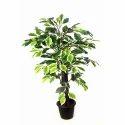 Verigated Ficus Artificial Plant