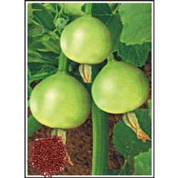 Esha Hybrid Summer Squash Seeds