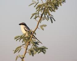 Biodiversity Impact Assessment