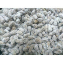 Ishan Agro Tech Bollgard Cotton Seed, For Agriculture, Pack Size: 450 Gm