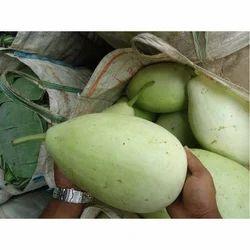 Fresh Bottle Gourd, Packaging: Jute Bag