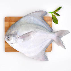 Frozen Pomfret Fish, Packaging Type: Thermocol Box
