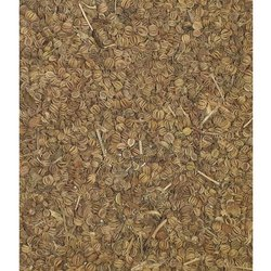 5 Year Ajmoda Seeds, Packaging Size: 40kg