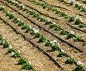 Drip Irrigation Services