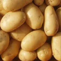 Fresh Potato, Packaging Size: 5-20 Kg, Pesticide Free