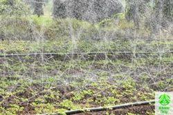Micro Sprinkler